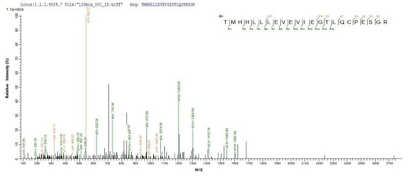 Mass Spectrometry - Recombinant Human HSPC152 protein (Tagged) (ab239546)