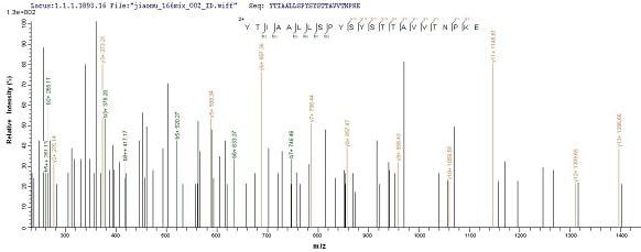 Mass Spectrometry - Recombinant Cynomolgus monkey Prealbumin protein (His tag) (ab239566)
