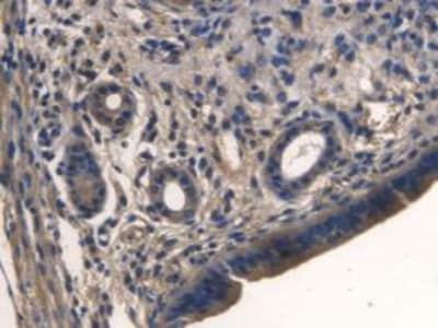 Immunohistochemistry (Formalin/PFA-fixed paraffin-embedded sections) - Anti-Tmem27 antibody [C7] (ab239586)