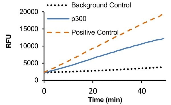 Measurement of HAT Activity: p300 (72 ng) or HeLa nuclear extract (positive control)