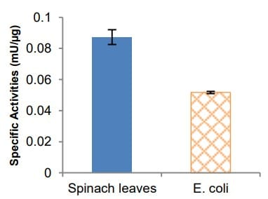 Specific PPC activities in Spinach leaves and E. coli cell lysate.