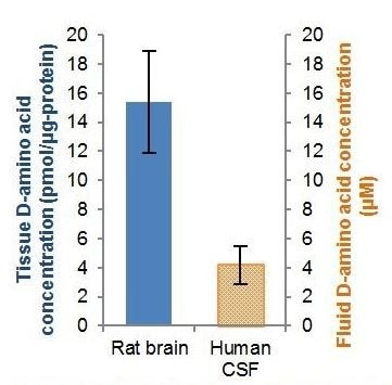 Estimations of total D-Amino acids in rat brain samples and pooled normal human CSF (15 µl).