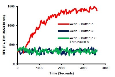 Actin Polymerization is induced by Buffer P.