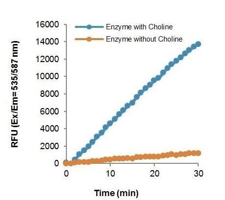 Kinetic reaction rate of ChoK with and without choline substrate in the assay.