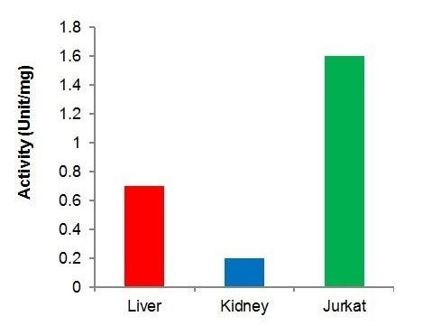 Activity of ChoK determined by the assay in different samples.