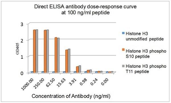ELISA - Anti-Histone H3 (phospho S10 + T11) antibody [E173] - BSA and Azide free (ab239803)