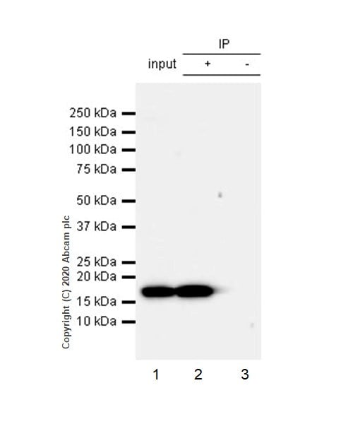 Immunoprecipitation - Anti-Histone H3 (phospho S10 + T11) antibody [E173] - BSA and Azide free (ab239803)