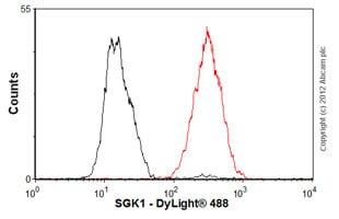 Flow Cytometry - Anti-SGK1 antibody [Y238] - BSA and Azide free (ab239812)