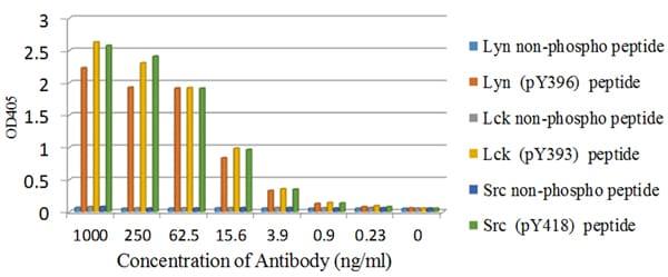 ELISA - Anti-SRC Family (phospho Y418) antibody [EP503Y] - BSA and Azide free (ab239824)