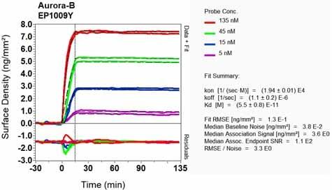 OI-RD Scanning - Anti-Aurora B antibody [EP1009Y] - BSA and Azide free (ab239837)