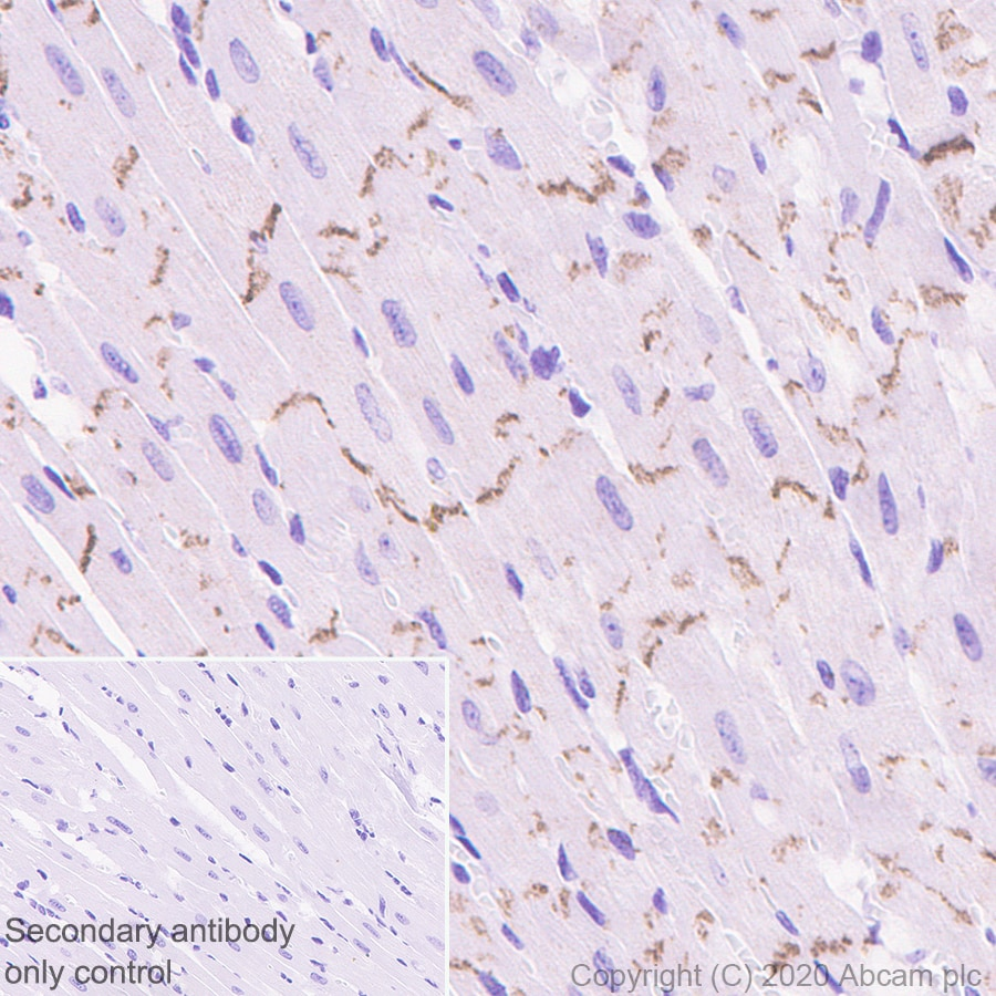 Immunohistochemistry (Formalin/PFA-fixed paraffin-embedded sections) - Anti-pan Cadherin antibody [EPR1792Y] - BSA and Azide free (ab239839)