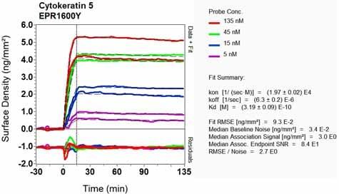 Other - Anti-Cytokeratin 5 antibody [EPR1600Y] - BSA and Azide free (ab239869)
