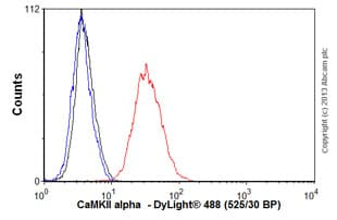Flow Cytometry - Anti-CaMKII alpha antibody [EPR1828] - BSA and Azide free (ab239906)