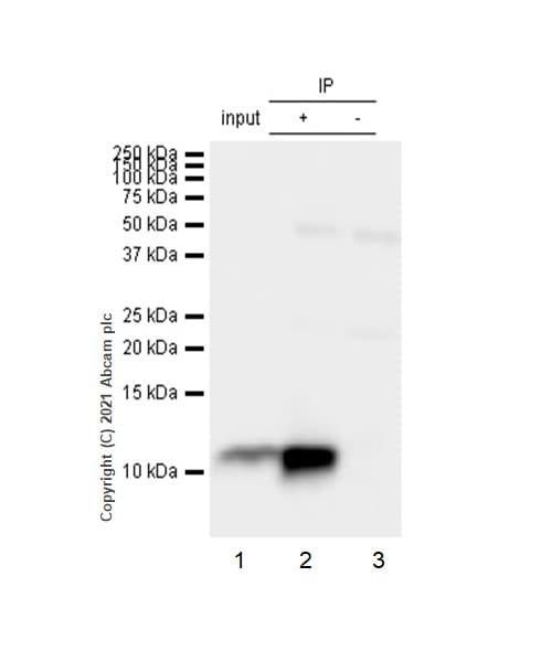 Immunoprecipitation - Anti-Estrogen Inducible Protein pS2 antibody [EPR3972] - BSA and Azide free (ab239908)