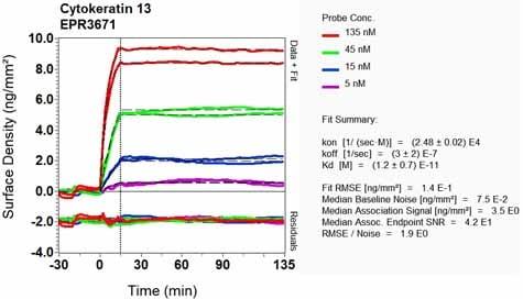 Other - Anti-Cytokeratin 13 antibody [EPR3671] - BSA and Azide free (ab239918)