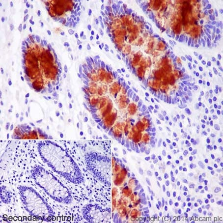 Immunohistochemistry (Formalin/PFA-fixed paraffin-embedded sections) - Anti-Trefoil Factor 3 antibody [EPR3974] - BSA and Azide free (ab239935)