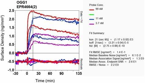 Other - Anti-Ogg1 antibody [EPR4664(2)] - BSA and Azide free (ab239996)
