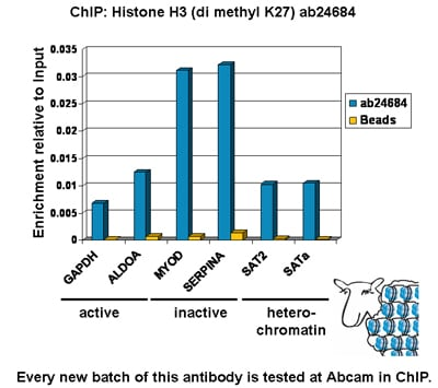 ChIP - Anti-Histone H3 (di methyl K27) antibody - ChIP Grade (ab24684)