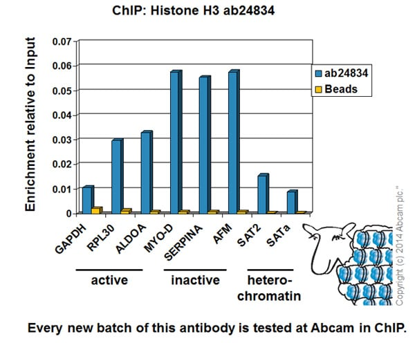 ChIP - Anti-Histone H3 antibody [mAbcam 24834] - Nuclear Loading Control and ChIP Grade (ab24834)