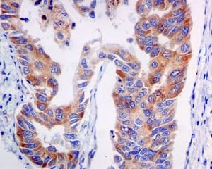 Immunohistochemistry (Formalin/PFA-fixed paraffin-embedded sections) - Anti-VPS34 antibody [EPR5301] - BSA and Azide free (ab240006)