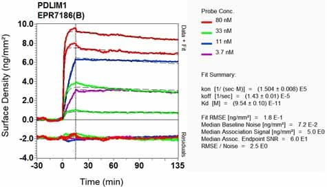OI-RD Scanning - Anti-PDLIM1/CLP36 antibody [EPR7186(B)] - BSA and Azide free (ab240039)