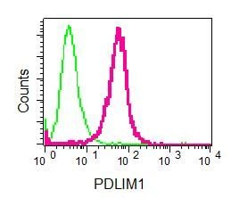Flow Cytometry (Intracellular) - Anti-PDLIM1/CLP36 antibody [EPR7186(B)] - BSA and Azide free (ab240039)