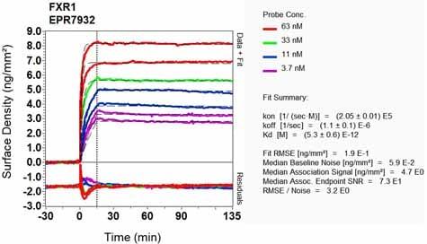 OI-RD Scanning - Anti-FXR1 antibody [EPR7932] - BSA and Azide free (ab240042)