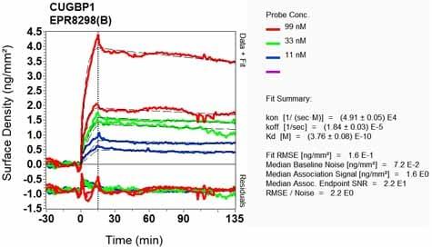 Other - Anti-CUG-BP1 antibody [EPR8298(B)] - BSA and Azide free (ab240044)