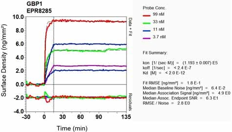 Other - Anti-GBP1 antibody [EPR8285] - BSA and Azide free (ab240050)