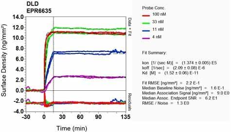 Other - Anti-Lipoamide Dehydrogenase antibody [EPR6635] - BSA and Azide free (ab240067)
