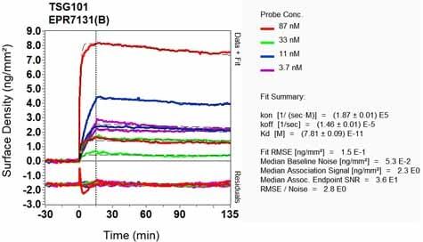 Other - Anti-TSG101 antibody [EPR7131(B)] - BSA and Azide free (ab240070)