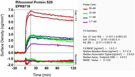Other - Anti-RPS20 antibody [EPR8716] - BSA and Azide free (ab240081)