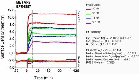Other - Anti-Methionine Aminopeptidase 2/p67 antibody [EPR6887] - BSA and Azide free (ab240082)