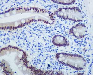 Immunohistochemistry (Formalin/PFA-fixed paraffin-embedded sections) - Anti-PDX1 antibody [EPR3358(2)] - BSA and Azide free (ab240084)