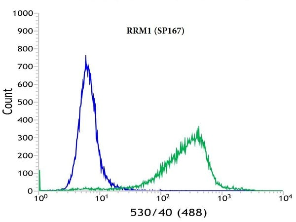 Flow Cytometry - Anti-RRM1 antibody [SP167] - BSA and Azide free (ab240093)