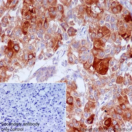 Immunohistochemistry (Formalin/PFA-fixed paraffin-embedded sections) - Anti-FACL4 antibody [EPR8640] - BSA and Azide free (ab240135)