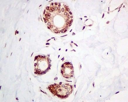 Immunohistochemistry (Formalin/PFA-fixed paraffin-embedded sections) - Anti-Emerin antibody [EPR11071] - BSA and Azide free (ab240138)