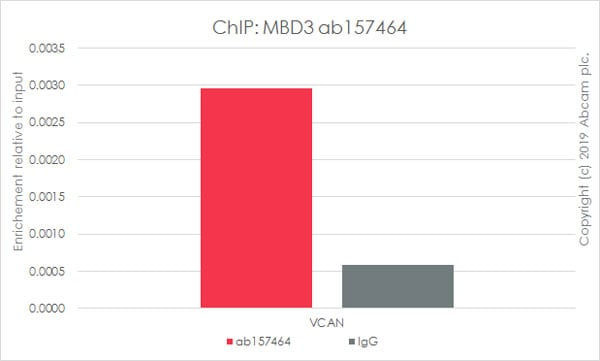 ChIP - Anti-MBD3 antibody [EPR9913] - BSA and Azide free (ab240144)