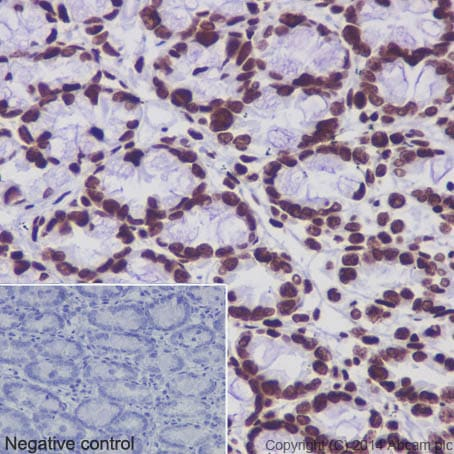 Immunohistochemistry (Formalin/PFA-fixed paraffin-embedded sections) - Anti-Histone H4 (acetyl K5 + K8 + K12 + K16) antibody [EPR16606] - BSA and Azide free (ab240201)