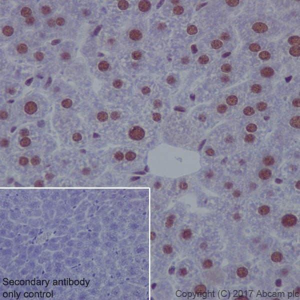 Immunohistochemistry (Formalin/PFA-fixed paraffin-embedded sections) - Anti-ATF1 antibody [EPR17028] - BSA and Azide free (ab240253)