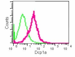 Flow Cytometry - Anti-Dcp1a antibody [EPR13822] - BSA and Azide free (ab240275)
