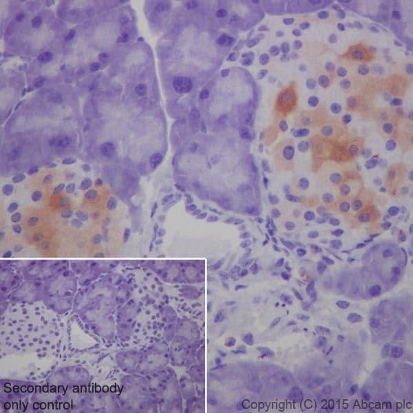 Immunohistochemistry (Formalin/PFA-fixed paraffin-embedded sections) - Anti-GAD65 + GAD67 antibody [EPR19366] - BSA and Azide free (ab240280)