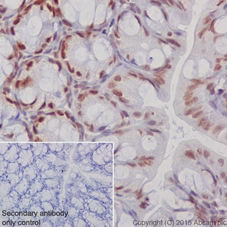 Immunohistochemistry (Formalin/PFA-fixed paraffin-embedded sections) - Anti-KAT7 / Hbo1 / MYST2 antibody [EPR18473] - BSA and Azide free (ab240315)