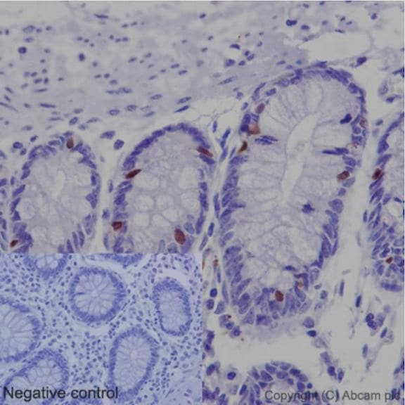 Immunohistochemistry (Formalin/PFA-fixed paraffin-embedded sections) - Anti-Nkx2.2 antibody [EPR14638] - BSA and Azide free (ab240318)