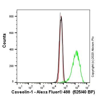 Flow Cytometry - Anti-Caveolin-1 antibody [EPR15554] - BSA and Azide free (ab240332)