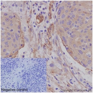 Immunohistochemistry (Formalin/PFA-fixed paraffin-embedded sections) - Anti-Caveolin-1 antibody [EPR15554] - BSA and Azide free (ab240332)