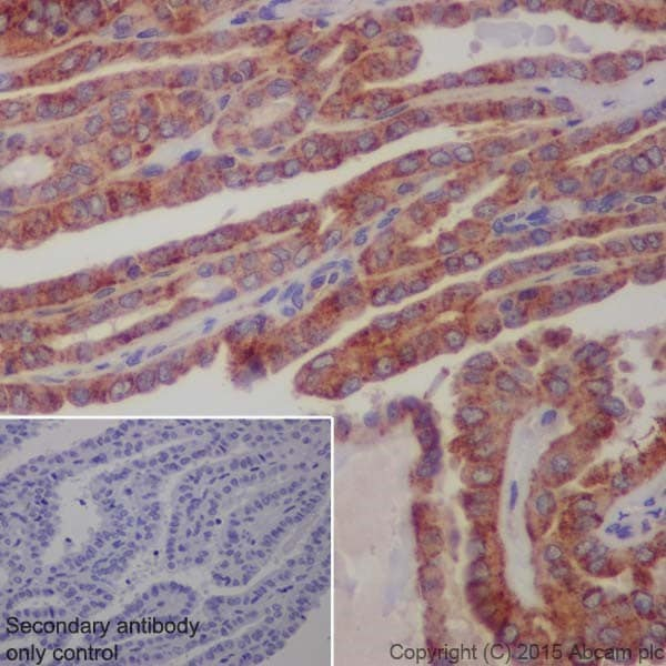 Immunohistochemistry (Formalin/PFA-fixed paraffin-embedded sections) - Anti-LAMP2 antibody [EPR19512] - BSA and Azide free (ab240351)