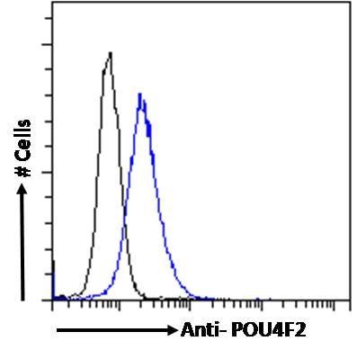 Flow Cytometry - Anti-BRN3B / POU4F2 antibody (ab240420)