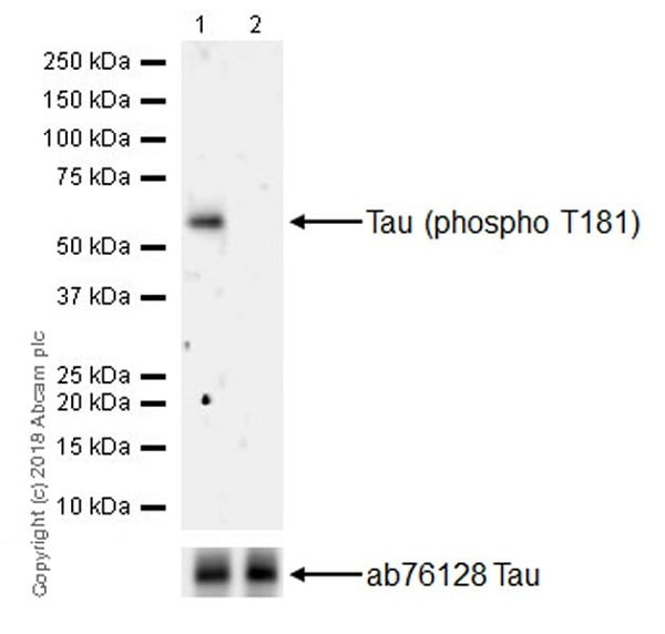 Western blot - Anti-Tau (phospho T181) antibody [EPR22064] - BSA and Azide free (ab240579)