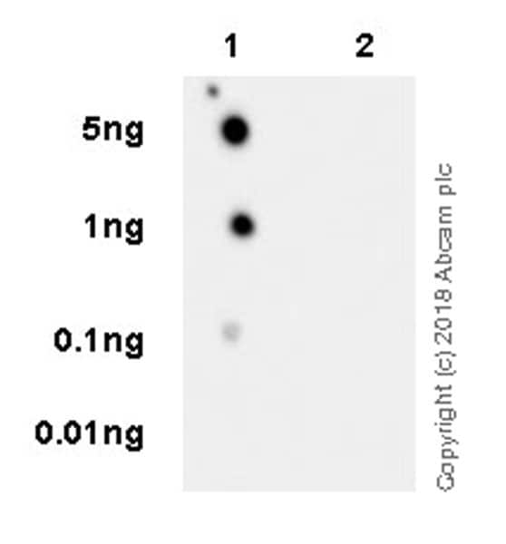 Dot Blot - Anti-Tau (phospho T181) antibody [EPR22064] - BSA and Azide free (ab240579)
